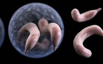 A parasite known as cryptosporidium, or