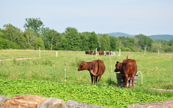 Consumers are making it clear they want more organic food on the shelves. (Maine Organic Farming)