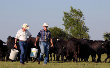 Some cattle producers say confusion at the grocery store over which beef is, and is not, produced in the U.S. hurts their industry. (Alice Welch/USDA)