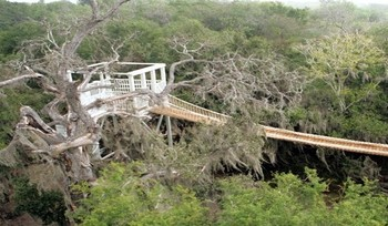 An observation platform sits above the tree canopy in the 2,088-acre Santa Ana National Wildlife Refuge. Advocates say building a border wall through this area would destroy the habitat of endangered species and migrating birds. (U.S. Fish and Wildlife Service)