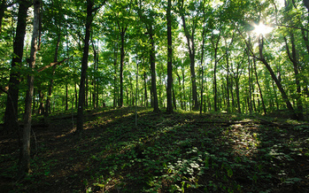 Carbon-offsetting programs benefit forests, which capture carbon and help fight climate change. (Joshua Mayer/Flickr)