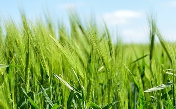 Grain prices are low and production costs are high, but Iowa farmers are still focused on land stewardship. (Pixabay)