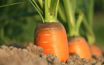 Community gardens at Colorado health centers are filling a critical need in areas considered food deserts. (Pixabay)