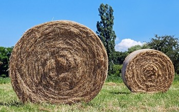Extreme drought in three states has caused a severe shortage of hay for ranchers and farmers. (Pixabay)