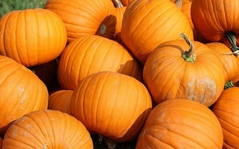 A fungus destroyed a $300,000 pumpkin crop, but traditional insurance only reimbursed $30,000. These types of situations have Iowa farmers looking at other insurance options. (127071/Pixabay)