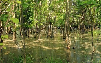 Missouri has seen its share of flooding this year, making wooded areas look more like swamp land. (Pixabay)