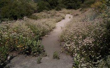 Buckwheat is among the pollinator-friendly plants. (Michael Lehet/Flickr)
