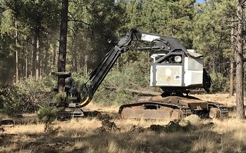 Crews are thinning trees in Chimney Springs, in the Kaibab National Forest near Flagstaff. (Steve Horner)