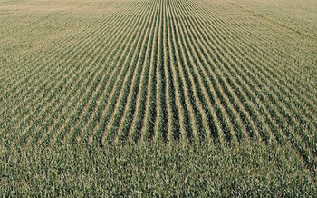More than 7 million acres of grassland and forest has been converted to agricultural production for ethanol production. (Ratfink1973/Pixabay)