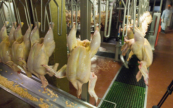 The current limit for line speeds in poultry processing factories is 140 birds per minute. (U.S. Department of Agriculture/Flickr)