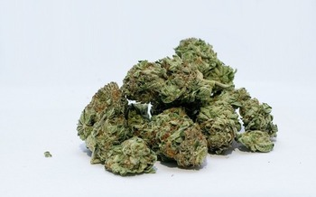 Retail sales of marijuana for recreational use were expected to begin this year in Maine. (gjbmiller/Pixabay)