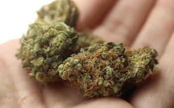 Nine states and Washington D.C. have legalized recreational marijuana. (StayRegular/Pixabay)