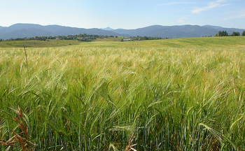 Climate change could cost Montana's agriculture sector 26,000 jobs over the next 50 years. (Matt Lavin/Flickr)