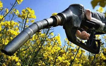 Environmental groups are supporting new legislation in Congress to reduce ethanol production in favor of next-generation biofuels. (theecologist.org)