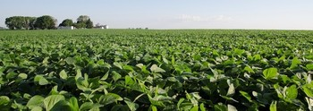 Soybean farmers lost an estimated $1.7 billion Wednesday as soybean futures tumbled with speculation of an impending trade war. (ilsoy.org)