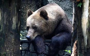 Critics warn that Wyoming's grizzly hunting proposal, which would allow hunters to use food in order to lure bears, could lead bears to associate food with humans. (Pixabay)