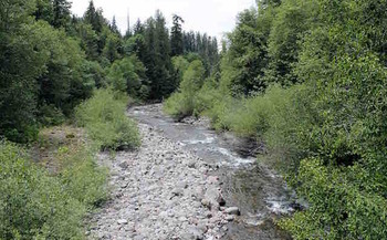 Researchers analyzed carbon dioxide levels in Lookout Creek east of Eugene to study the effects of rising global temperatures. (Theresa Hogue/Oregon State University)
