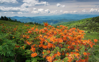 The Roan Highlands features scenes like native azaleas and the world's largest rhododendron garden. (Ken Lane/flickr)