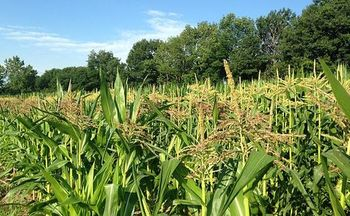 New Hampshire farmers are concerned about the merger of Monsanto with Bayer, which will dominate markets for pesticides and herbicides that vegetable farmers use. (MarkBuckawicki)