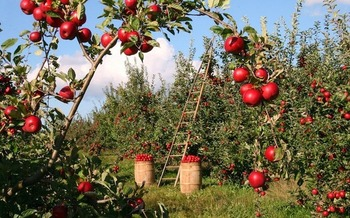 New York is one of the top three apple producing states in the nation. (lumix2004/Pixabay)