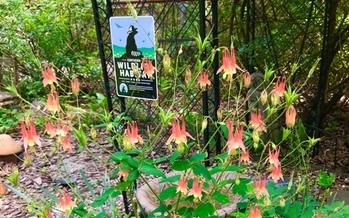 Iowans are encouraged to create wildlife habitat gardens to help save pollinator species. (NWF)