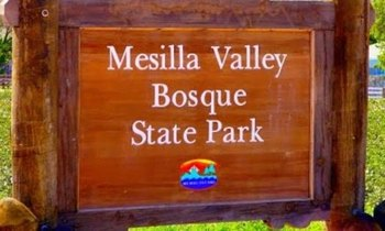 The threatened Land and Water Conservation Fund helped purchase 13 remaining acres to create the Mesilla Valley Bosque State Park. (mybosquefriends.org)