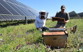 A solar farm near Medford, Ore., also is home to 48 thriving bee colonies. (Pine Gate Renewables)