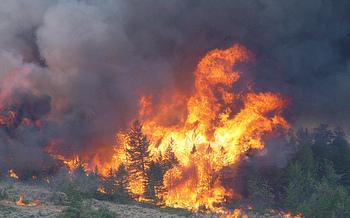 Last year was one of the most devastating wildfire seasons in Montana's history. (Dan Borsum/NOAA)