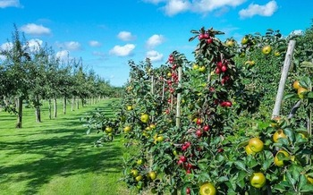 Chlorpyrifos is used extensively on apples and other fruits and vegetables. (Skitterphoto/Pixabay)