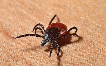 Place clothes in the dryer on high heat for 10 minutes to kill any ticks being carried on clothing. (Pixabay)