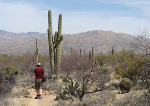 Saguaro National Park is among many sites in Arizona to have received Land and Water Conservation Fund support. (Jimmy Thomas/Flickr)