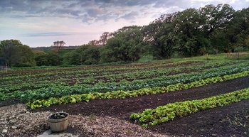 Iowa farmer Danelle Myer started her One Farm on a half-acre in 2011 to grow tomatoes, lettuce, radishes, beets and other vegetables. (Danelle Myer)