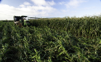 The Renewable Fuel Standard has led to an all-time high demand for corn, but also water shortages and pollution. (Bob Nichols/U.S. Department of Agriculture)