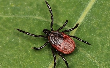 Tick-borne diseases are increasing as climate change increases summer temperatures. (Kaldari[CC0]/Wikimedia Commons)
