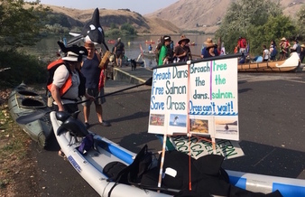 Environmental groups say removing four lower Snake River dams would restore salmon populations, providing food to Northwest orcas. (Save Our Wild Salmon)