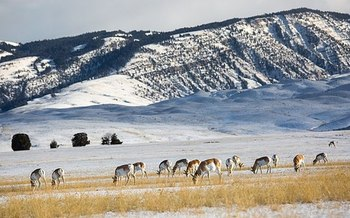 Nearly four in five voters surveyed support incentives for Wyoming farmers and ranchers to conserve wildlife habitat on their lands, while at the same time operating as a working farm or ranch. (NPS)