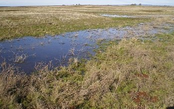 Wetlands and vernal pools such as this one would no longer be protected under a new rule proposed by the Environmental Protection Agency. (Podruznik/Wikimedia)