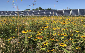 Advocates say pollinator-friendly solar farms benefit the environment and surrounding farms as they generate clean power for local communities. (The Nature Conservancy)