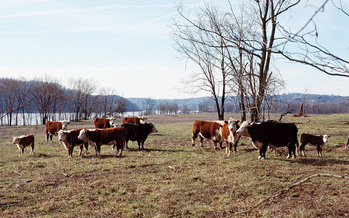 The agriculture industry's stewardship plan comes in response to tougher federal regulations on antibiotics in livestock. (William Alden/Flickr)