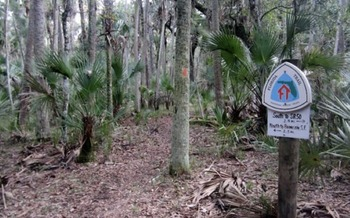 Treasured places in Florida, such as the Florida National Scenic Trail, benefit from the Land and Water Conservation Fund. (USFS)