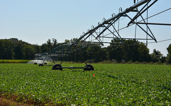 As Texas farmers have increased corn and soy production to reach goals set by the Renewable Fuel Standard, water supplies have been strained. (U Delaware/Flickr)