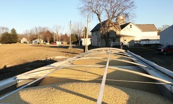 A trailer packed with soybeans at Windy Way Farm in Massillon, Ohio. (Nathan Reineck)