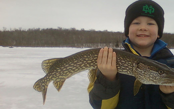Overall, larger and longer-lived fish including northern pike build up the most mercury because they eat many smaller fish that contain mercury. (fws.gov)