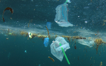 By 2050, experts estimate, there will be more plastic by weight in the oceans than fish. (Richard Carey/Adobe Stock)