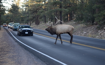 New Mexico is developing a study to identify areas where wildlife crossing roadways are consistently hit by motorists. (wildlandnetwork.org)