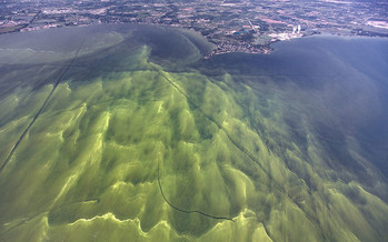 Incentive programs could boost the use of agricultural practices that reduce the nutrient runoff linked to algal blooms. (Zachary Haslick, Aerial Associates Photography Inc./Flickr)