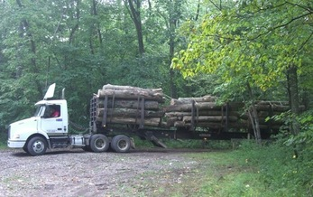 An average volume of 14 million board feet of timber annually is prescribed to be sold from Indiana state forests between 2015 and 2019. (Indiana Forest Alliance)