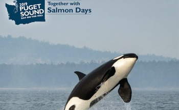 Salmon recovery in Puget Sound is critical for the survival of Southern Resident orcas. (Puget Sound Partnership)