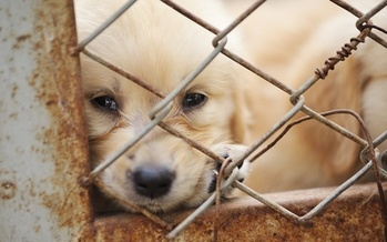 Many problem puppy mills aren't cited for inhumane conditions because they operate in secrecy. (sommai/Adobe Stock)