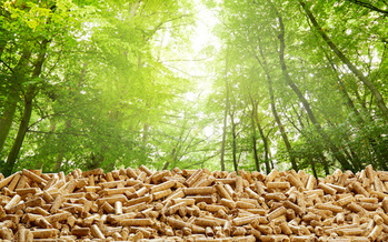 Wood pellets are a type of biofuel made from trees. In some European countries, pellets are used in large-scale power plants once fueled by coal. (Adobe Stock)